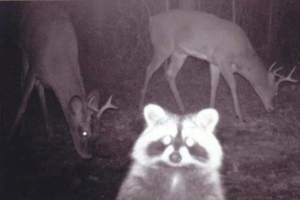 záběry lesních zvířat z fotopastí