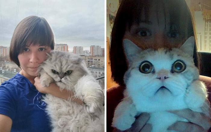 MILUJEME KOČKY: Jak by to vypadalo, kdyby vše mělo kočičí obličej?