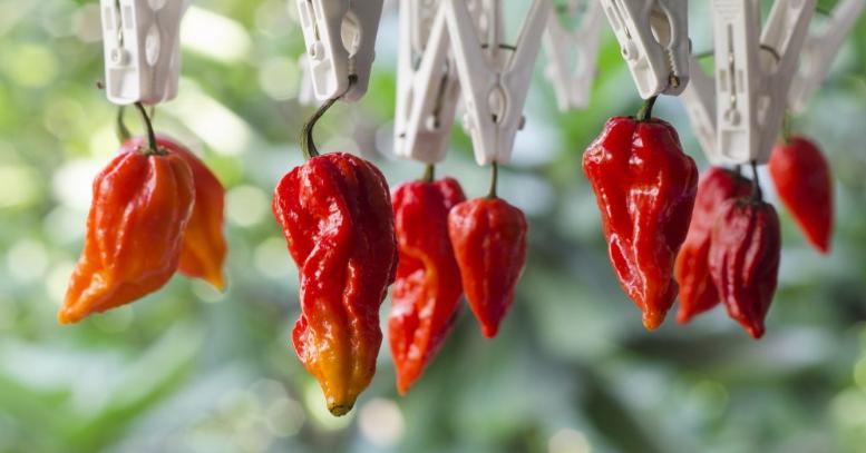 DRAČÍ DECH: Nejpálivější chilli paprička na světě!