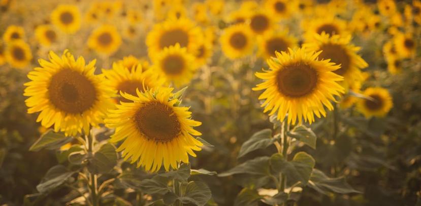 MUŽ JEDL KAŽDÝ DEN SEMÍNKA: Z konečníku mu vyrostla slunečnice
